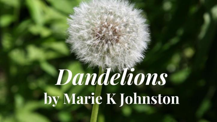 dandelions image